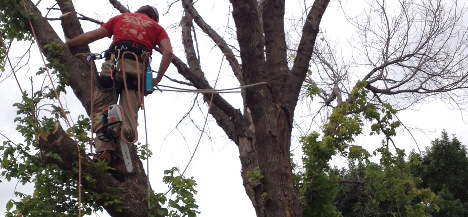 Image result for tree removal flower mound